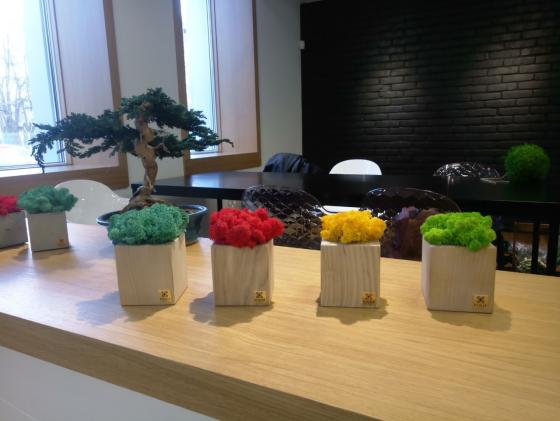 Бонсай и кубы со мхом в интерьере