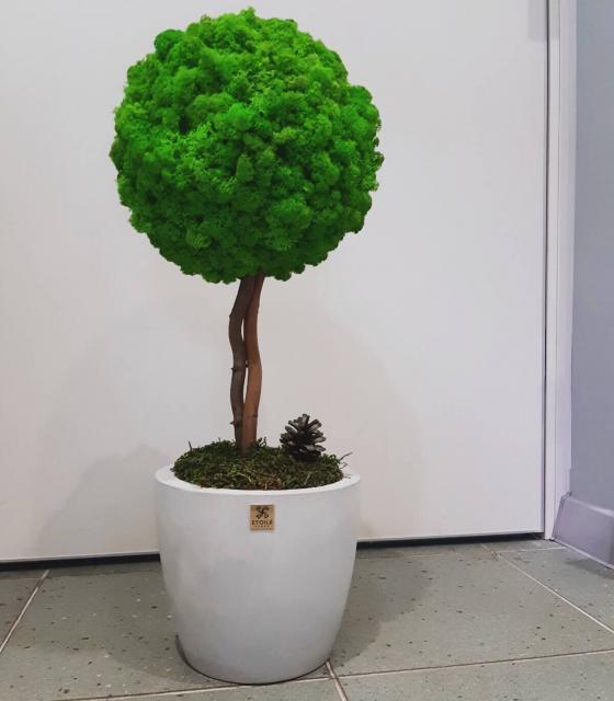 Дерево мечты