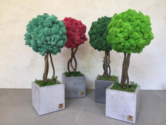 Шикарные деревья