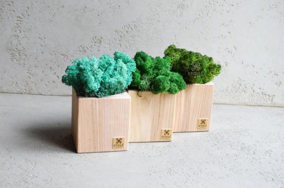 Оригинальный деревянный куб со мхом