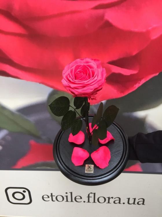 Малиновая роза