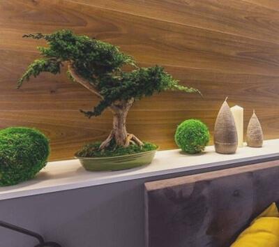 Маленькое дерево бонсай: фото