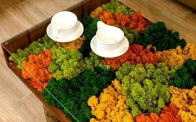 Декоративный мох