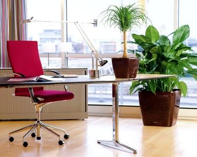 Растения в оформелнии офиса: фото