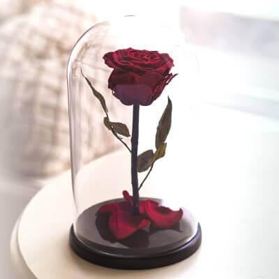 Стабилизированная роза в колбе: фото