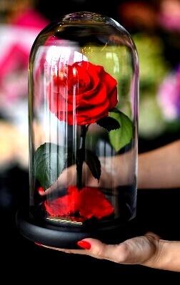 Уход за розой в колбе: фото