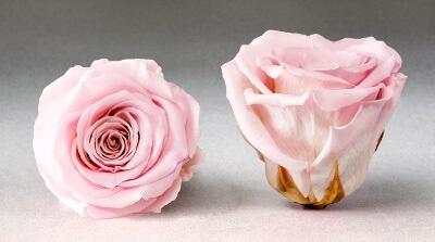 Стабилизированные бутоны роз: фото