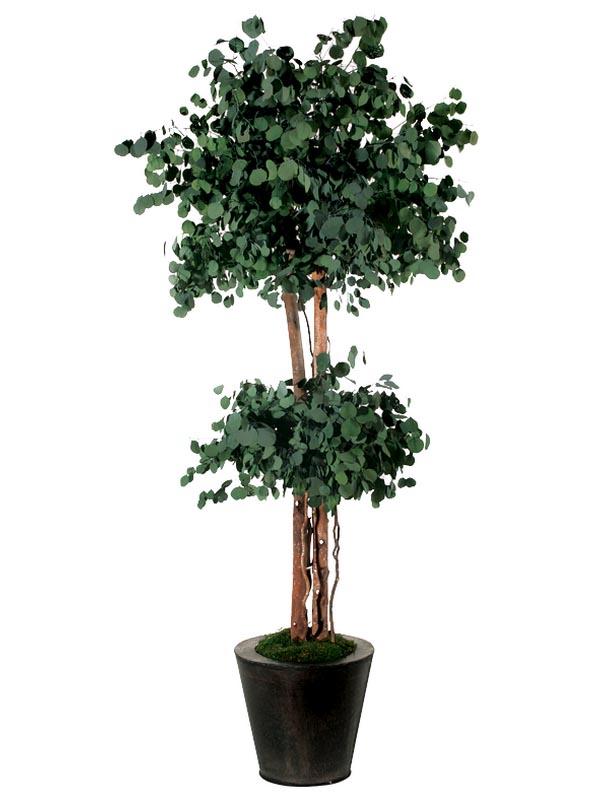 Стабилизированное дерево
