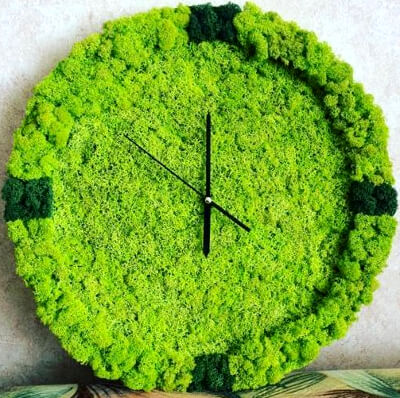 Часы из мха: фото