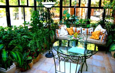 Домашние е стабилизированные растения: фото