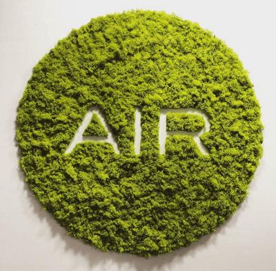 Логотип из мха: фото