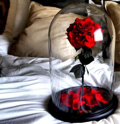 Роза в колбе в подарок: фото