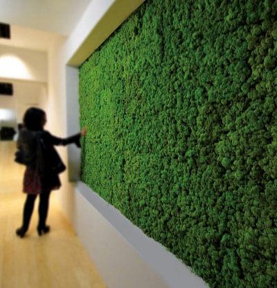Вертикальное озеленение: фото