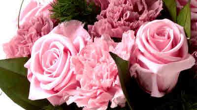 Цветы от Verdissimo: фото