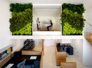 Преимущества создания фитопространств для офисов