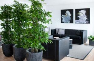 Выбираем деревья для вашего дома