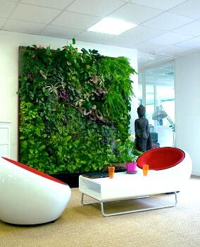 Озеленение стен в доме: фото