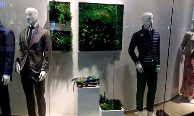 Стабилизированные растения на витрине: фото