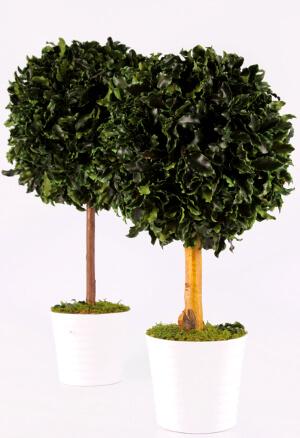 Стабилизированные домашние деревья: фото