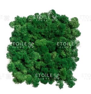 Мох Ягель насыщенный зеленый: фото