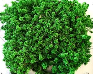 В чем разница солевой и глицериновой стабилизации растений?