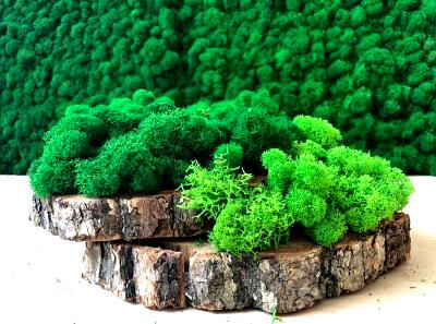 Стабілізований мох Ягель: фото