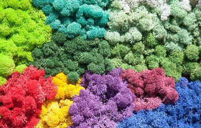 Різнокольоровий мох: фото