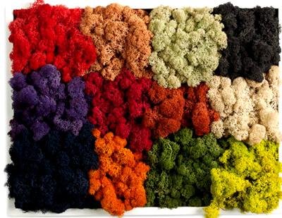 Разноцветный стабилизированный мох: фото