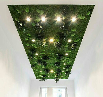 Мох на потолке: фото