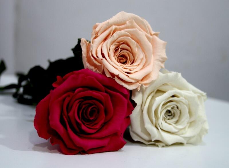 Сравнение искусственной и стабилизированной розы
