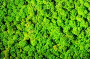 Стена из мха: озеленение пентхауса