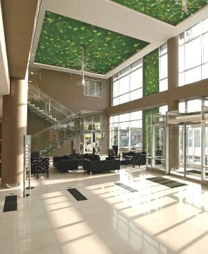 Стабилизированный сад на потолке: фото