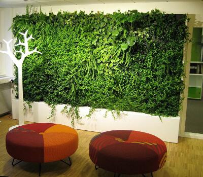 Вертикальное озеленение растениями: фото