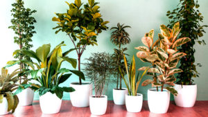 Модные комнатные растения 2018