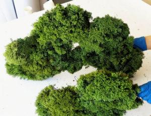 Как сделать раствор для стабилизации растений самостоятельно