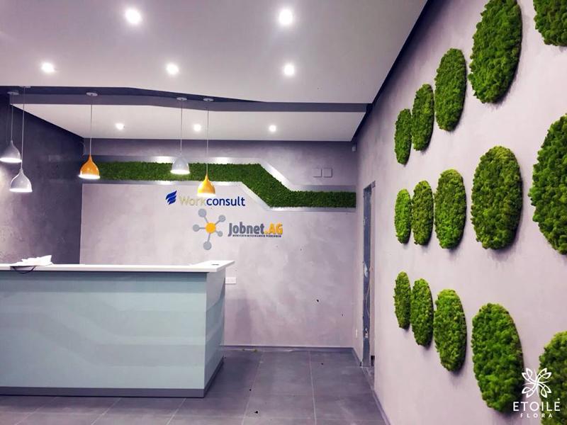 Озеленение офиса стабилизированными цветами