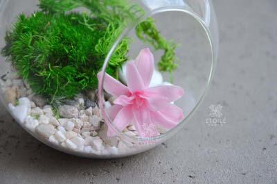 Маленький флорариум