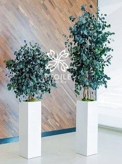 Лофт и стабилизированные растения