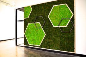 Оформление салона стабилизированными растениями