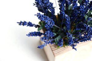 Искусственные растения или стабилизированные: что выбрать?
