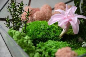 Мифы о стабилизированных растениях