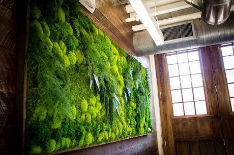 Зеленый оазис в городских условиях
